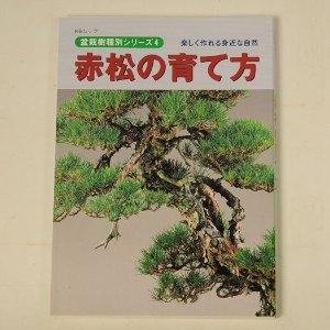 Photo1: Akamatsu no sodatekata(Bonsai red pine manual book)